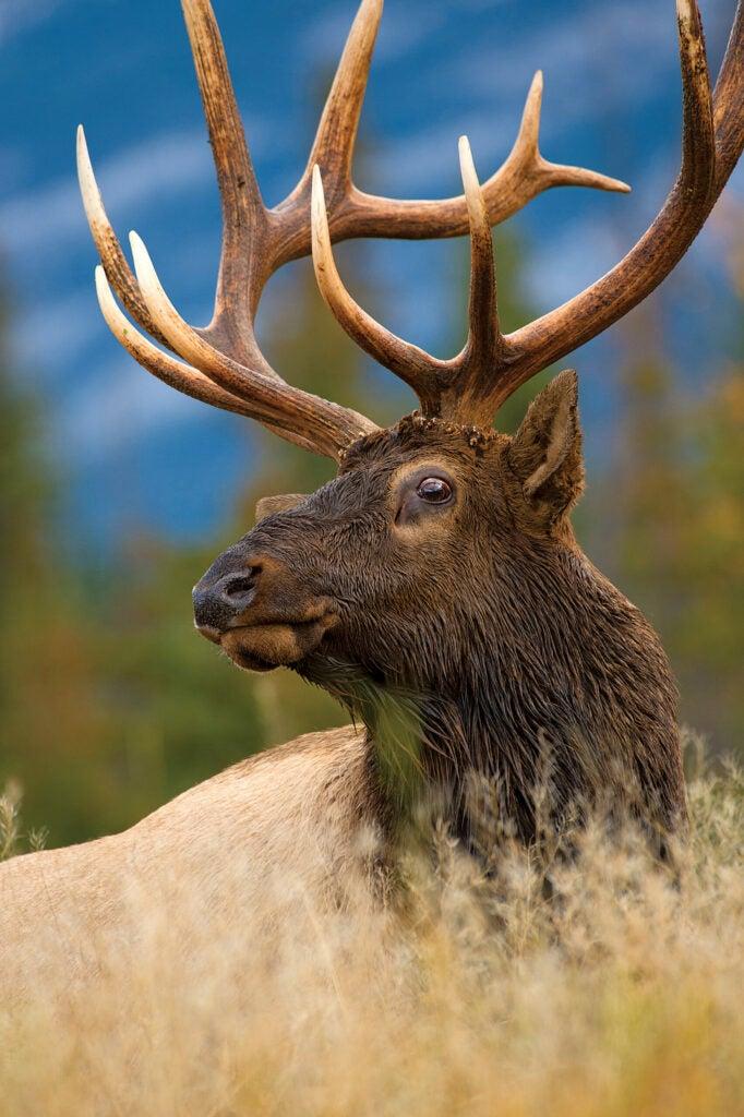 hunting post-rut elk