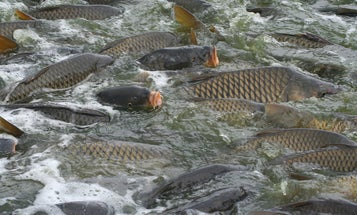 Fishing Regulation Roundup: New Fishing Opportunities, Plans, and Bans