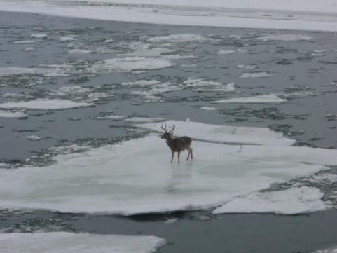 httpswww.outdoorlife.comsitesoutdoorlife.comfilesimport2013images20101210_24_Ice_Flow_Buck_3_0_0.jpg