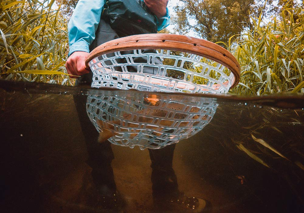 fisherman with net scooping up a brown trout