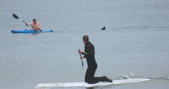 Great White Shark Closes Down Cape Cod's Nauset Beach