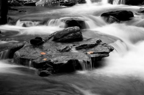httpswww.outdoorlife.comsitesoutdoorlife.comfilesimport2014importImage2009photo7Decfoliage_3.jpg
