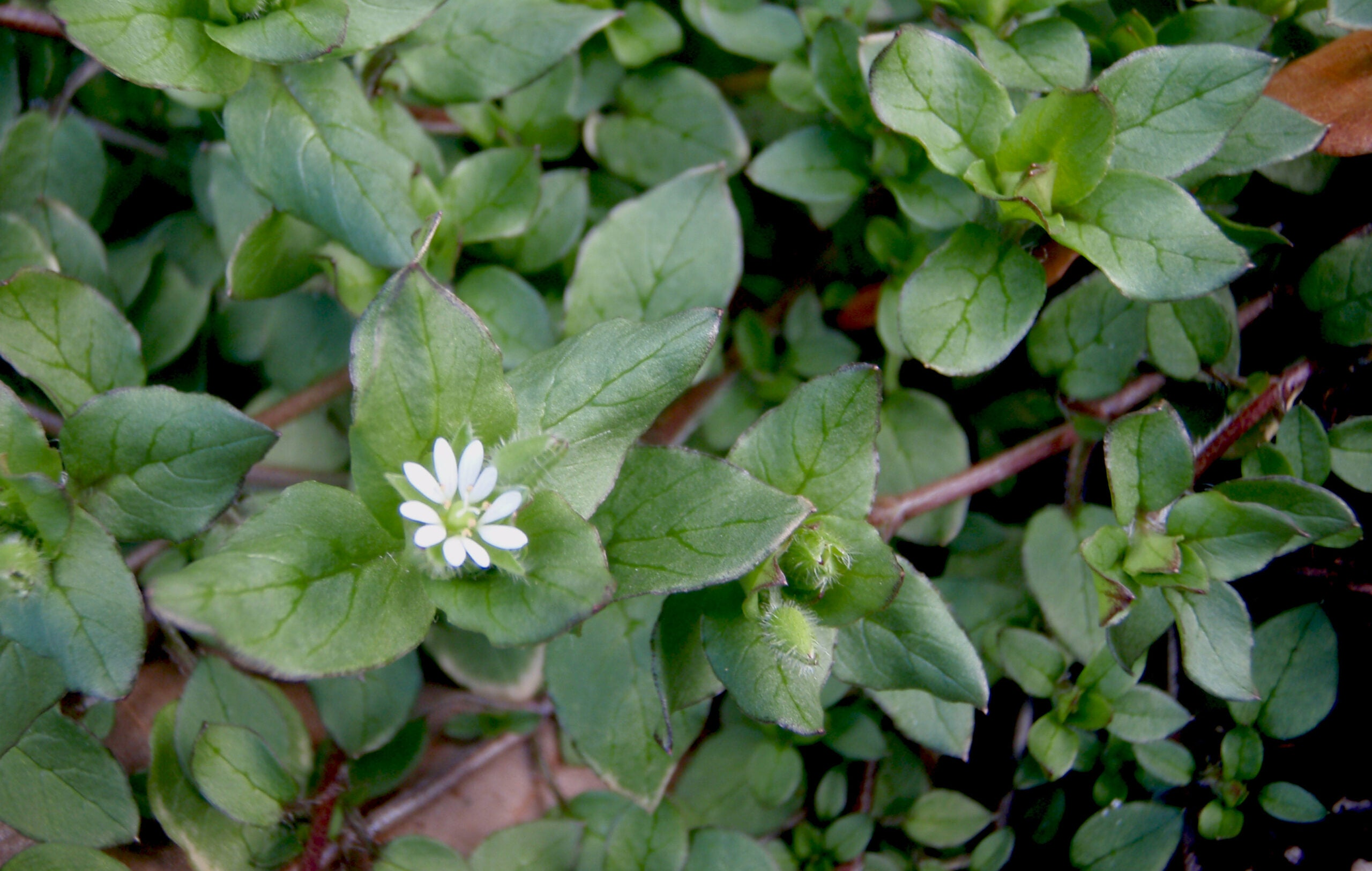 Survival Skills: How to Avoid a Spring Foraging Failure