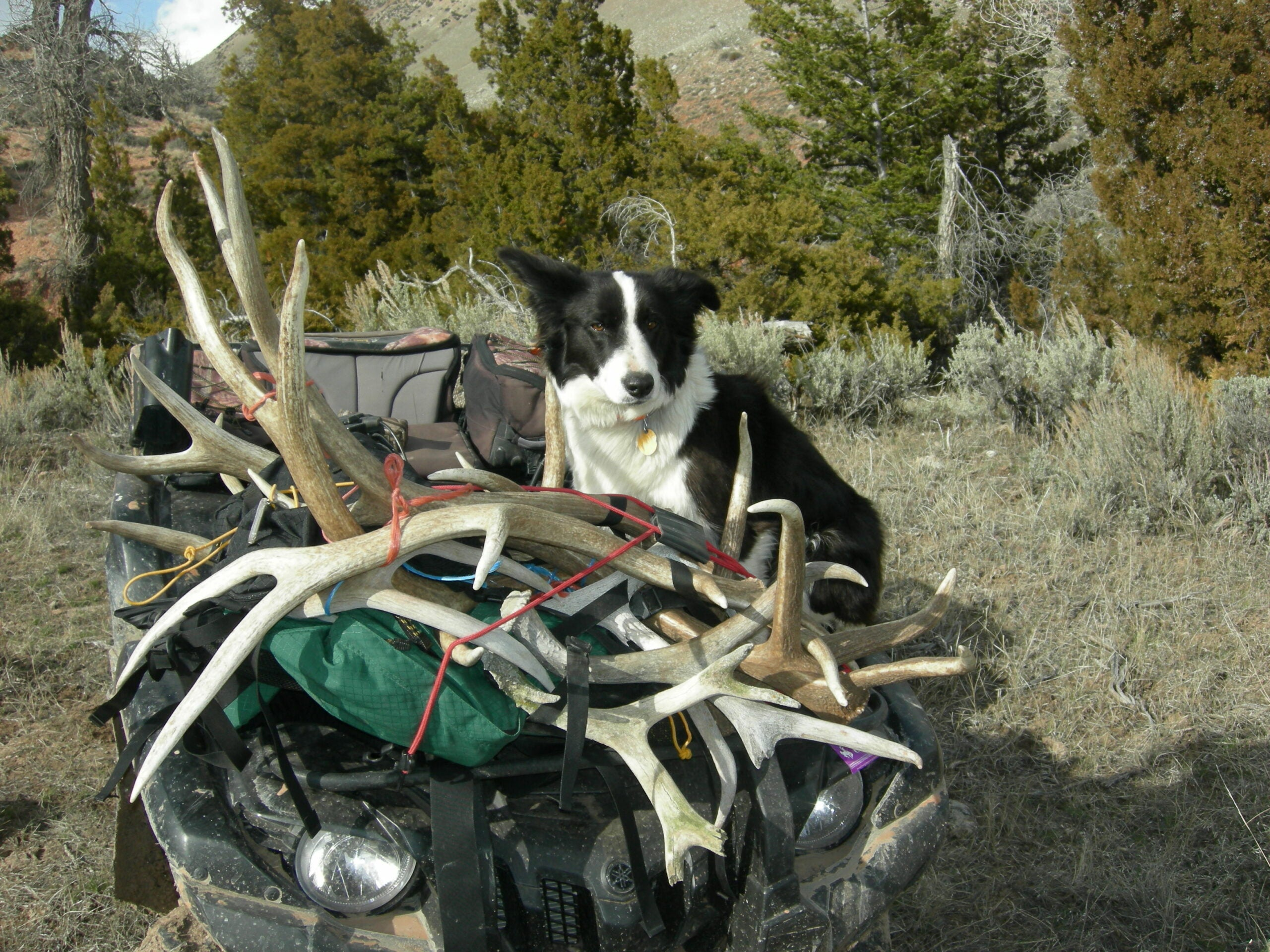 An Elevated Shed Hunting Experience
