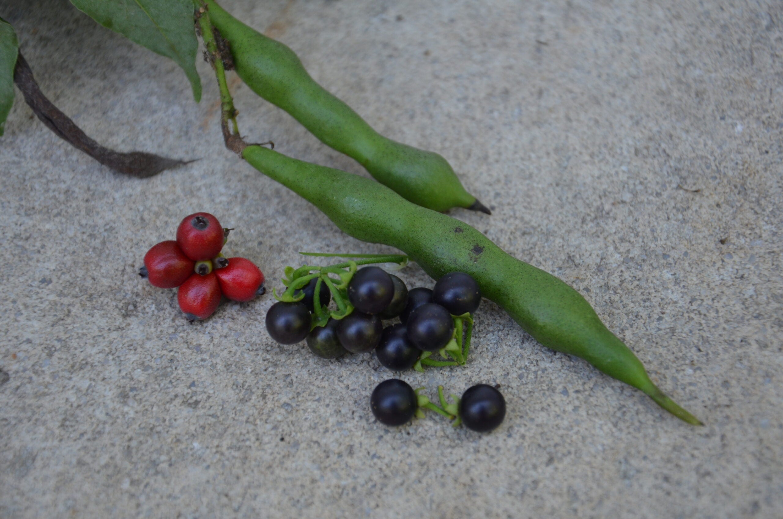 13 Toxic Wild Plants That Look Like Food