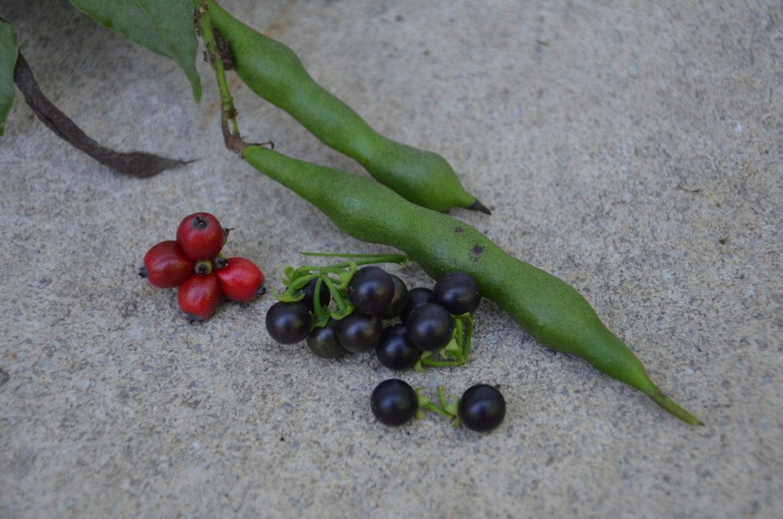 13 Toxic Wild Plants That Look Like Food