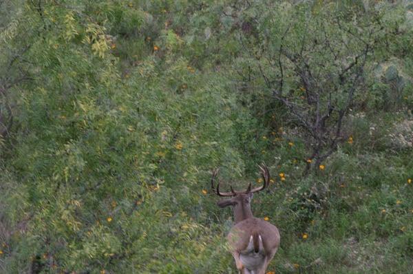httpswww.outdoorlife.comsitesoutdoorlife.comfilesimport2014importImage2010photo30010FordRanch_137.jpg
