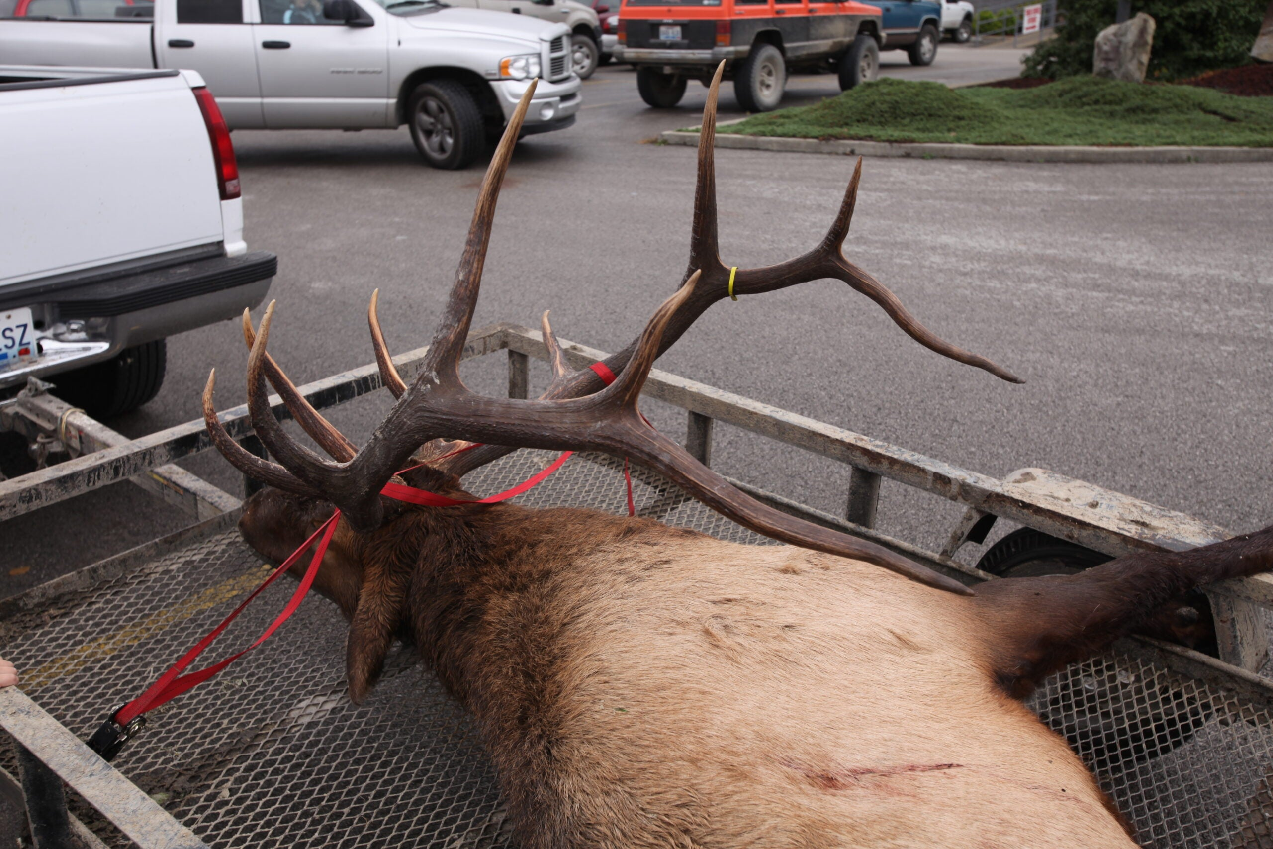 Elk Hunting's New Frontier: How and Where to Draw a Bull Tag in the East