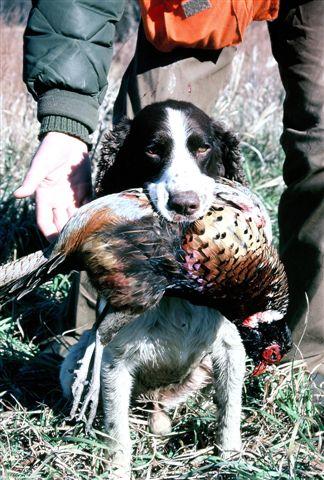 httpswww.outdoorlife.comsitesoutdoorlife.comfilesimport2014importImage2009photo78_Michigan.jpg