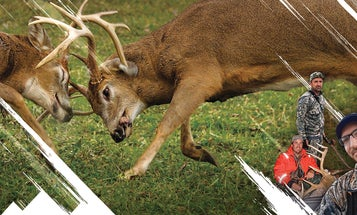Hunting The Rut: Crazy For It
