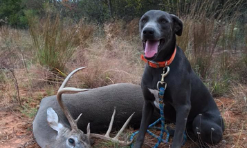 Need Some Help Finding Your Deer? Call In a Deer Tracking Dog