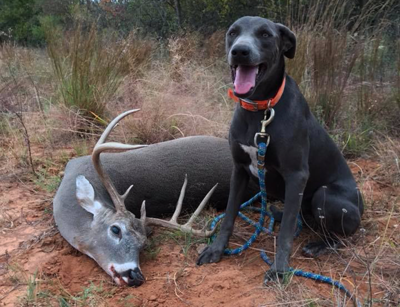 deer tracking dogs