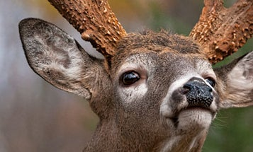 Deer Hunting: Figure out Your Rut Strategy Now