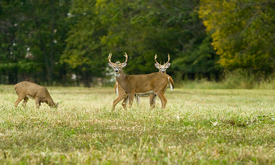 Whitetail Tips: What You Need to Know About Food Sources to Pinpoint Bucks