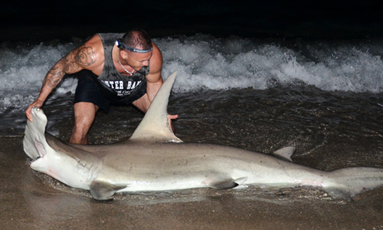 Angler Lands Giant Hammerhead From Beach, Wins Florida Fishing Tournament