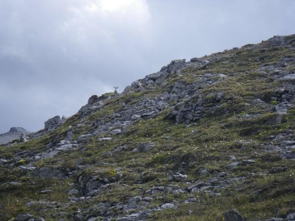 httpswww.outdoorlife.comsitesoutdoorlife.comfilesimport2013images2010106_Yukon3F_0.jpg