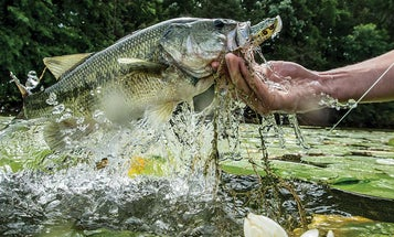 4 Bass Bait Lessons from a Topwater Legend