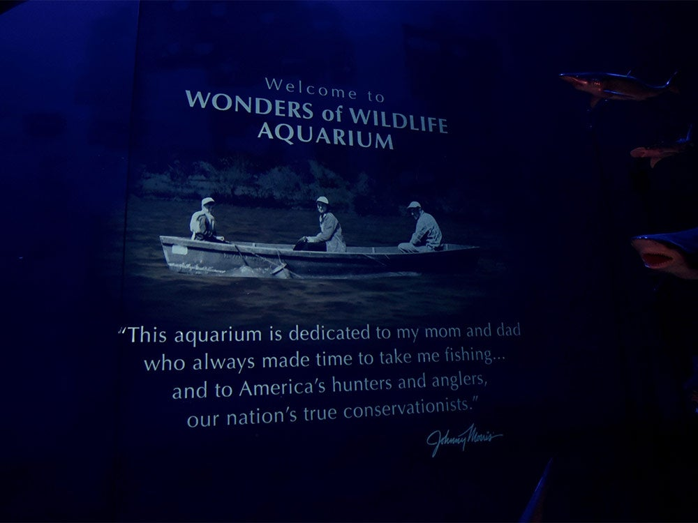 """""""Wonder"""