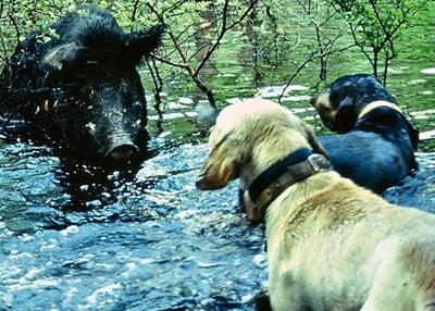 httpswww.outdoorlife.comsitesoutdoorlife.comfilesimport2014importImage2008legacyoutdoorlifewater_cornered_8.jpg