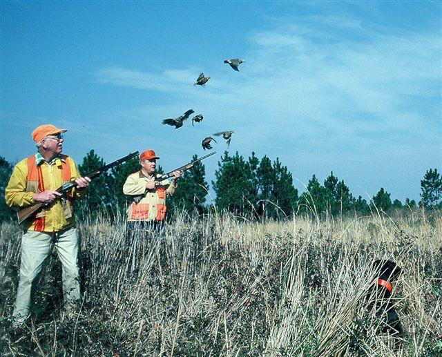 httpswww.outdoorlife.comsitesoutdoorlife.comfilesimport2014importImage2009photo71._Alabama.jpg