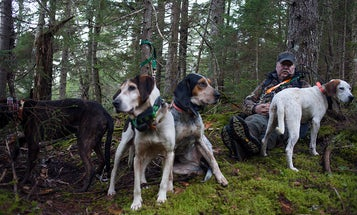 Bear Hunting with Hounds Revisited: Another Referendum on the Horizon