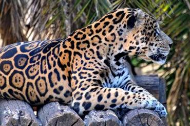 Brazilian Scientists Plan to Clone Endangered Species