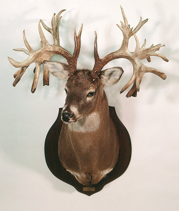 Missouri record buck
