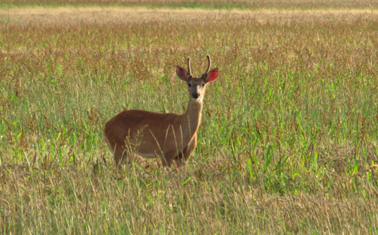 Is State Deer Management Ruining Your Hunting?