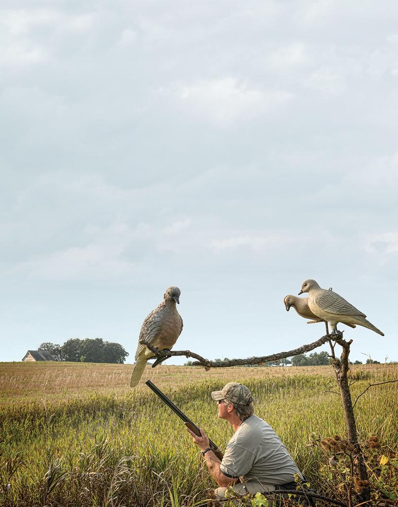 dove hunting calls