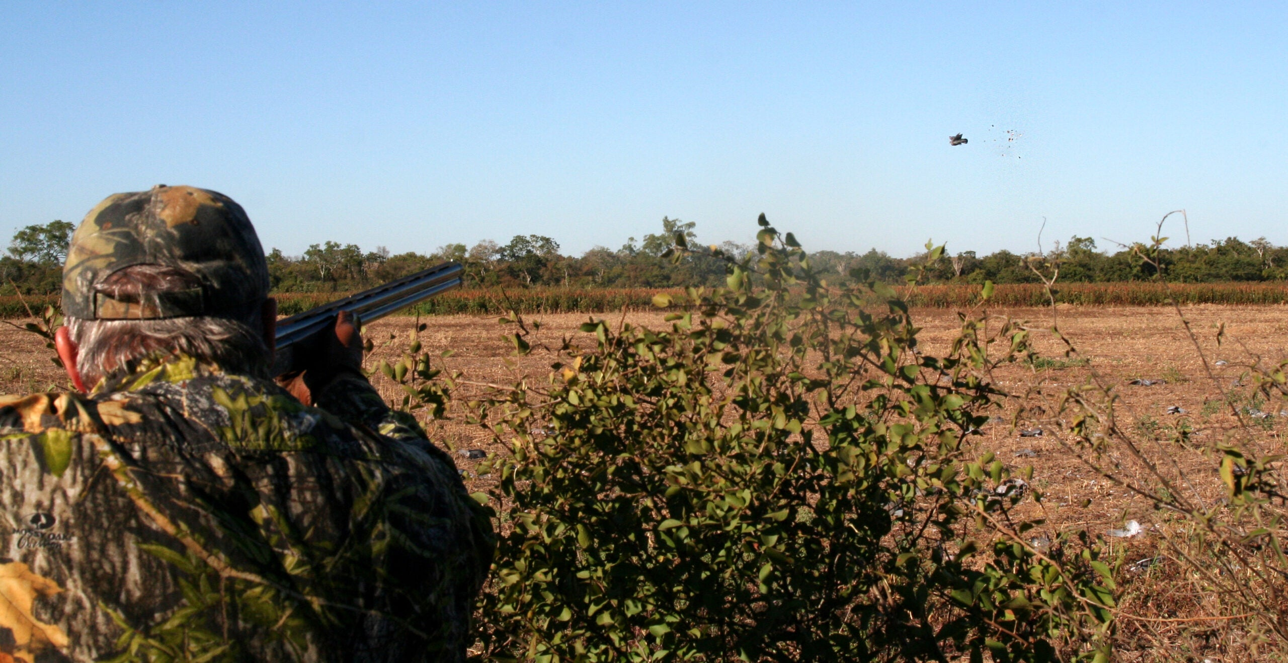 Dove Hunting: Practice Crossing Shots Now for a Better Opening Day