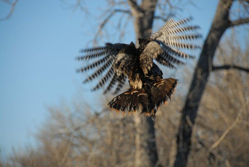 httpswww.outdoorlife.comsitesoutdoorlife.comfilesimport2014importImage2009photo7DSC_0967.JPG