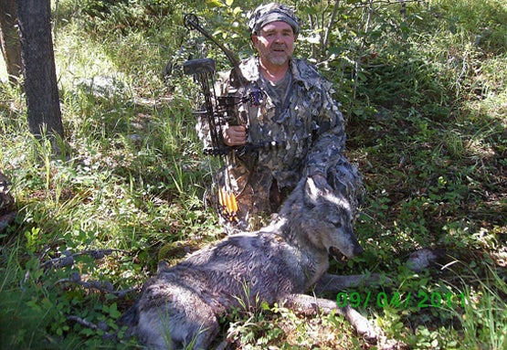 Montana Hunter Takes Wolf With Bow, First in Recent History