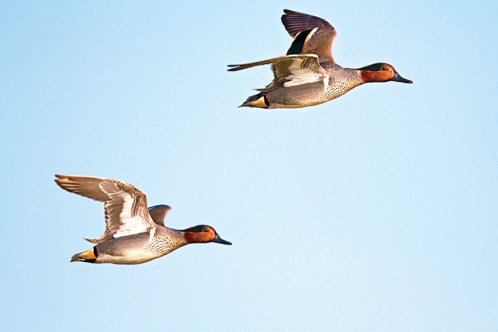 lead ducks for better accuracy