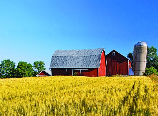 grain and barn