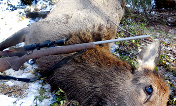 Packing Time: A Solo Elk Hunt