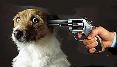 How to Kill Your Dog?