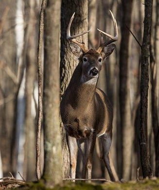 Public Land Deer Hunting: How to Save America's Whitetail Woods
