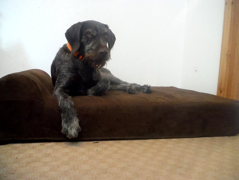 old-hunting-dog-bed