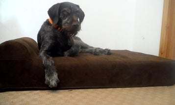 Want Your Dog to Hunt Better? Give Him a Real Bed