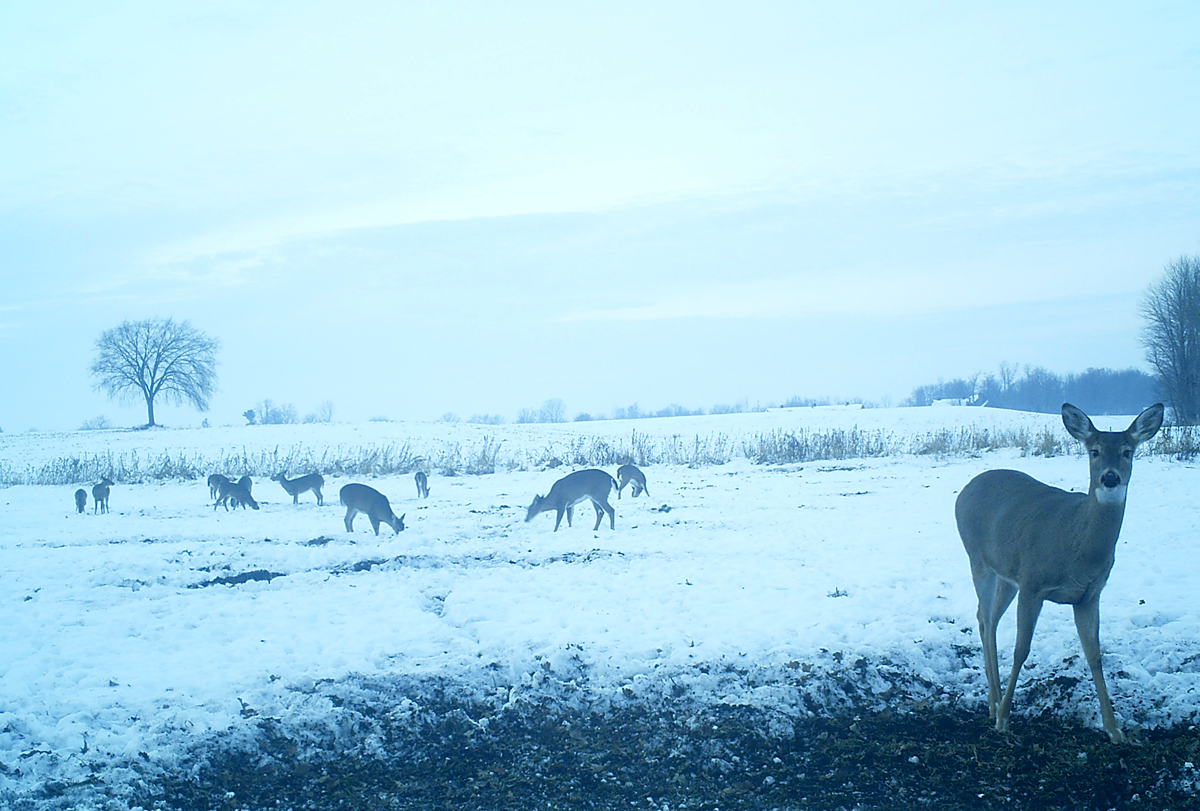 4 Ways to Fill the Freezer When Deer Season is Nearly Over