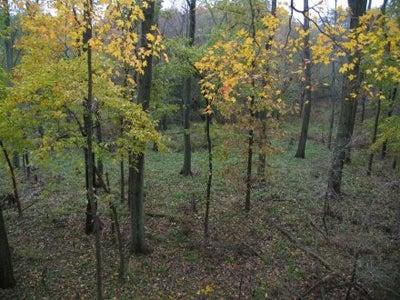httpswww.outdoorlife.comsitesoutdoorlife.comfilesimport2014importImage2008legacyoutdoorlifefaulkner_early_season_14.jpg