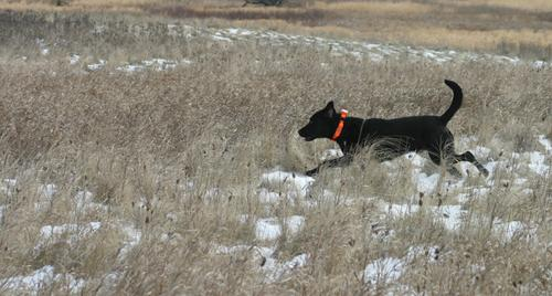 Training Tips: Teach Your Dog to Follow a Scent Trail