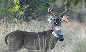 Collar Cameras Provide a New Way to Monitor Deer Behavior