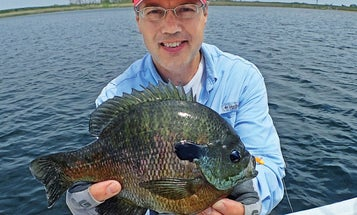 4 Tips to Catch Giant Bluegills This Spring