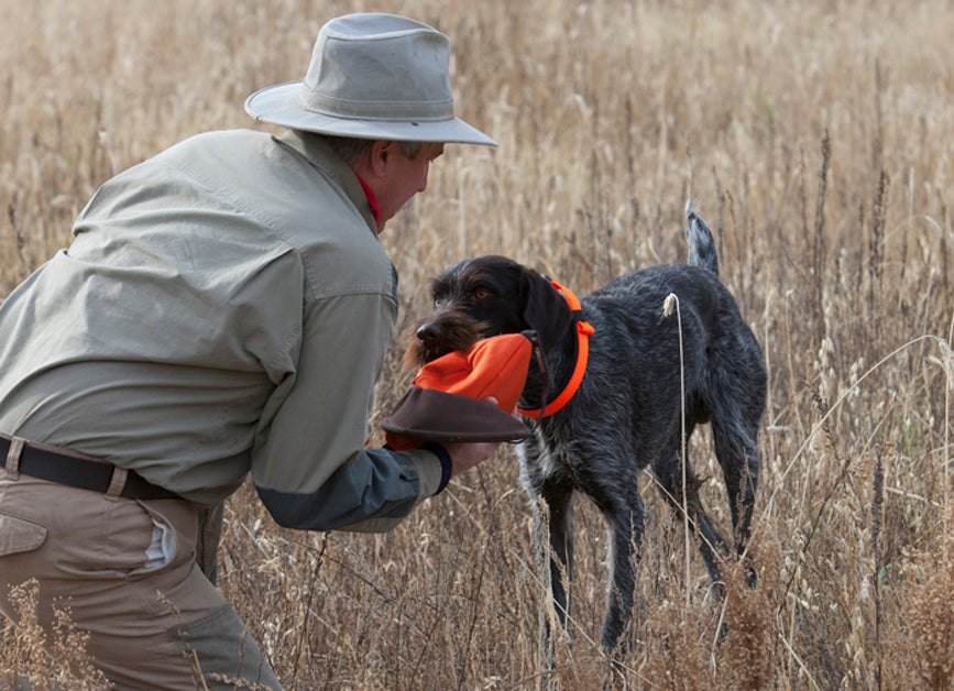 Training Tips: Think Like a Dog and Give Straight Commands
