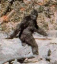 The Bigfoot Hunt