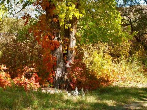 httpswww.outdoorlife.comsitesoutdoorlife.comfilesimport2014importImage2009photo7Decfoliage_68.jpg