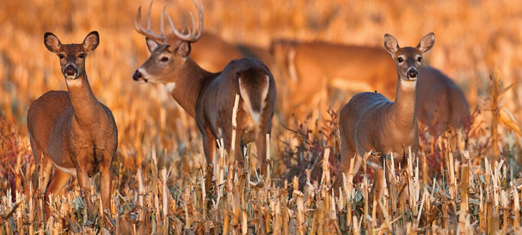 opening day deer hunting tips