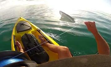 Video: Handlining Tarpon from a Kayak