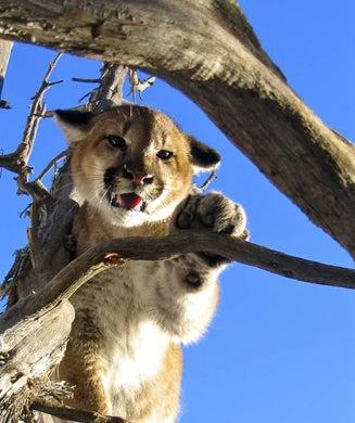 Outdoor Life Photo Contest 2010: Wildlife
